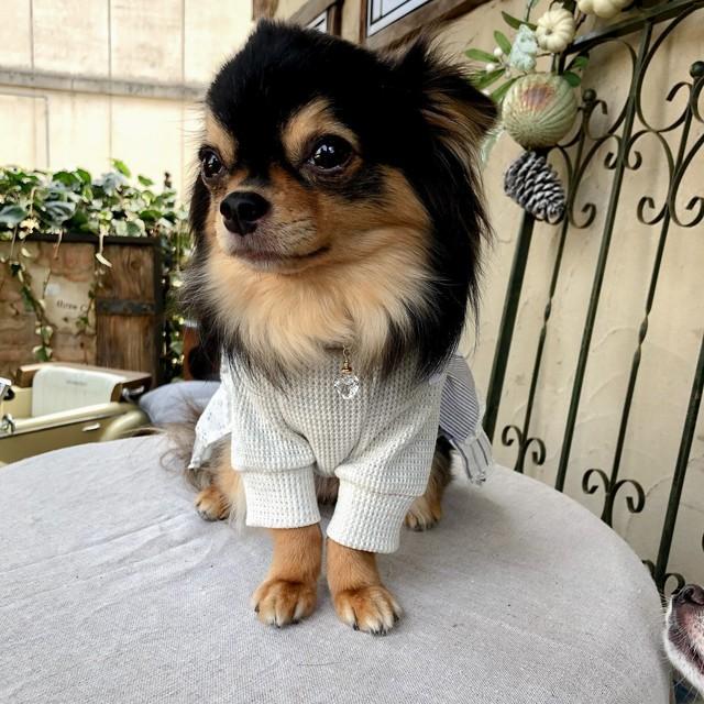 わんちゃん用 お守り水晶 チャーム(ハート型・しずく型) Rootstock × COCOLIO チャリティー商品です。保護犬・保護猫活動のボランティア団体『ぼくらはみんないきている』様に売上の一部を寄付します。