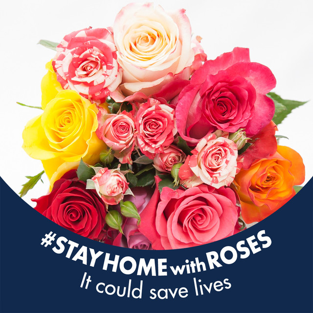 「Stay Home with Roses」約8本
