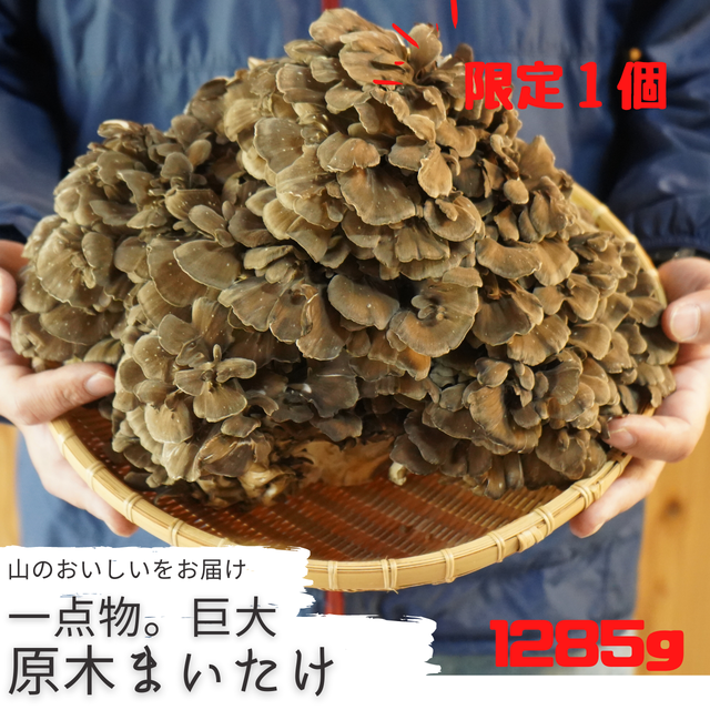 【限定1個!】 巨大原木舞茸 / 1285g