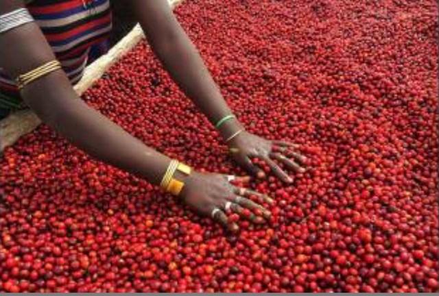 コーヒー豆 エチオピア ゲイシャ Ethiopia Gesha Village Chaka Gesha Natural, Benchi Maji 100g
