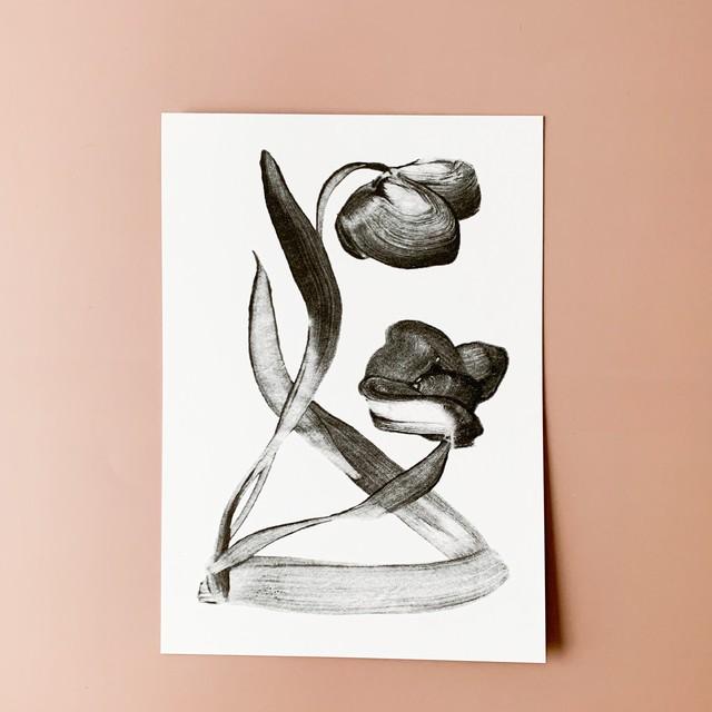 STILLBEN - A5 アートプリント/ポスター - TULIP I by Rita Ek