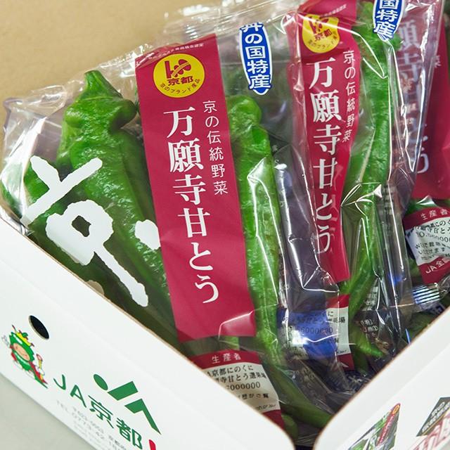万願寺甘とう 秀品150g×8袋(化粧箱入り)