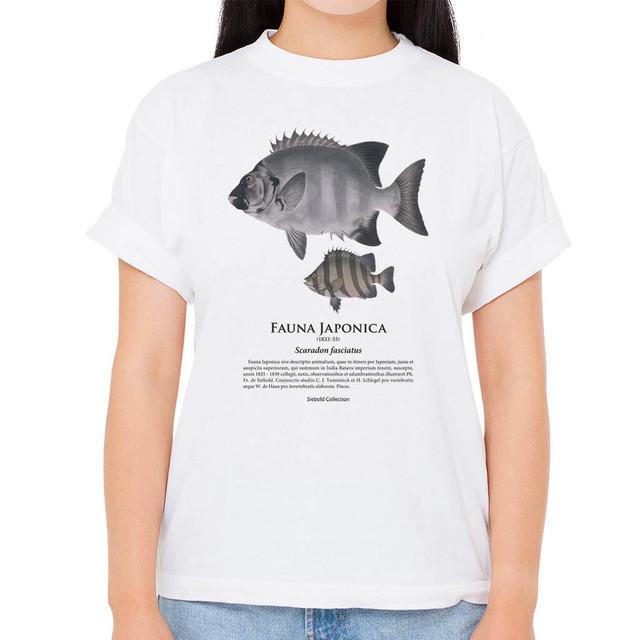 【イシダイ】シーボルトコレクション魚譜Tシャツ(高解像・昇華プリント)
