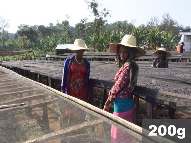 エチオピア | シェカ カヨカミノ農園 ナチュラル | コーヒー豆200g