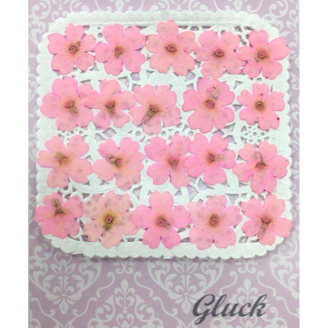 コンパクト押し花 バーベナ(さくらピンク) 少量をパックにしてお届け! 押し花素材