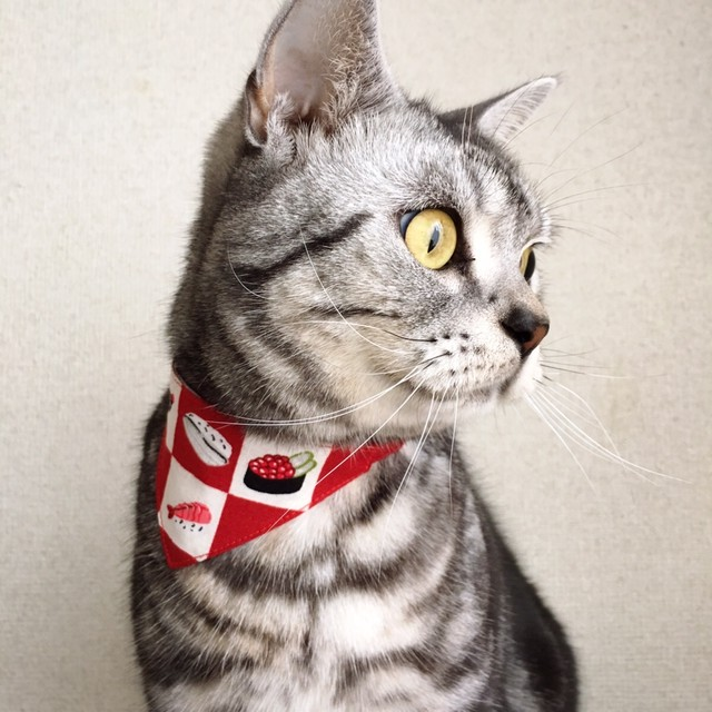 寿司市松柄レッド 猫用バンダナ風セーフティ首輪