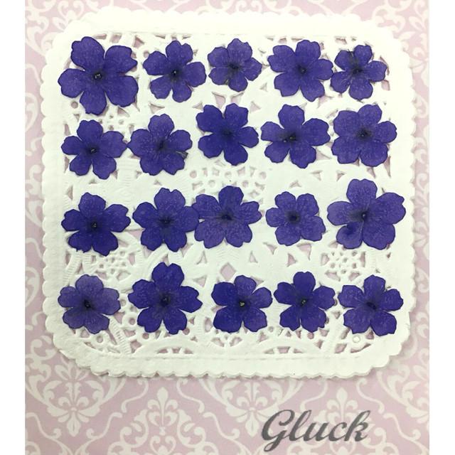 コンパクト押し花 バーベナ(パープル) 少量をパックにしてお届け! 押し花素材