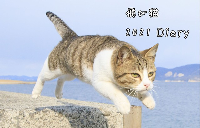 飛び猫ボクサーパンツ2