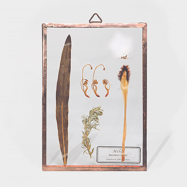 Botanical Frame S012(A_Gold)