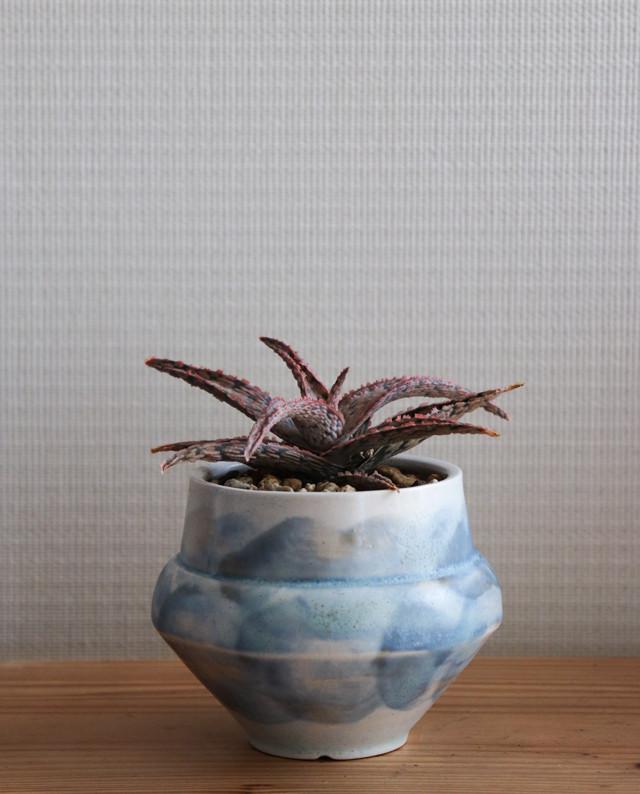 Pot. jewelry(夏庭色)と植物セット