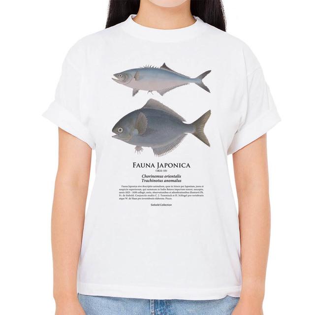 【イケカツオ・イボダイ】シーボルトコレクション魚譜Tシャツ(高解像・昇華プリント)