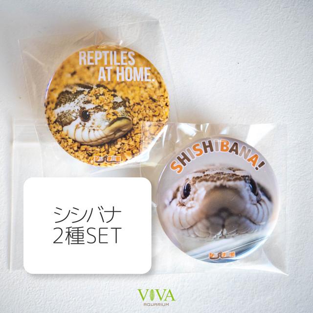 【同梱可】缶バッジ(シシバナ2種セット)