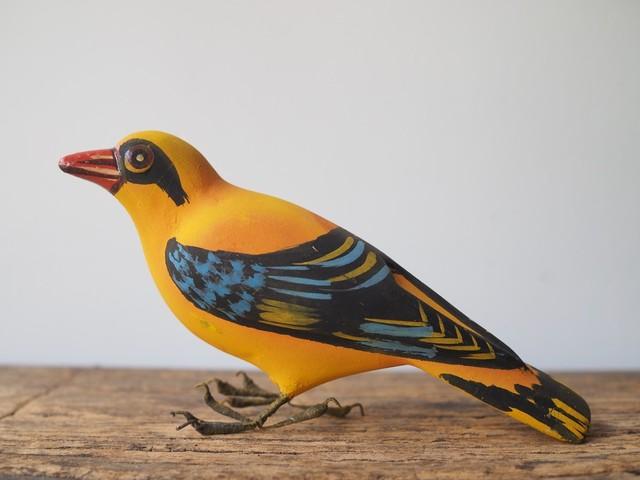 indian bird - song bird