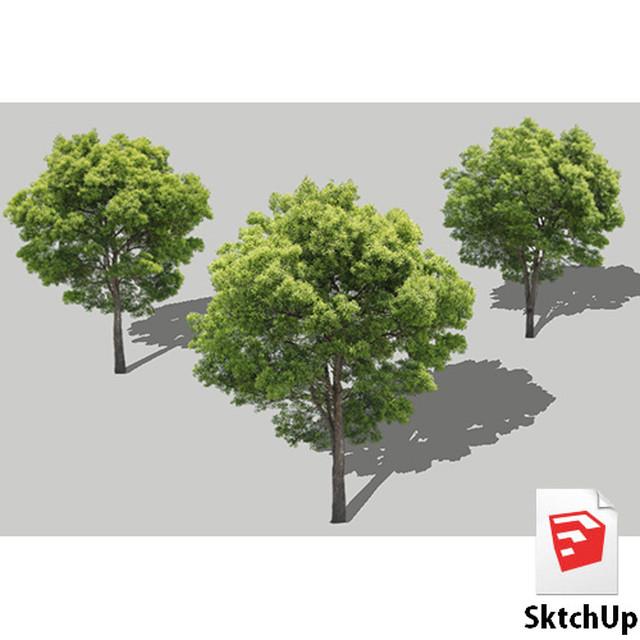 樹木SketchUp 4t_001 - メイン画像