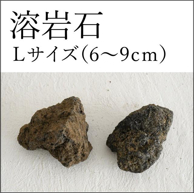 溶岩石 Lサイズ(6〜9cm)2個入り【レイアウト用・着生用】