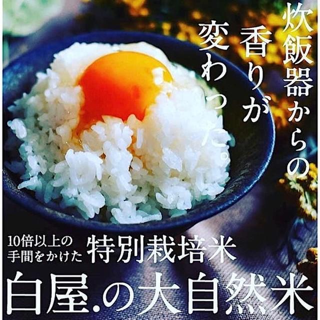 大自然米【10kg】無洗米