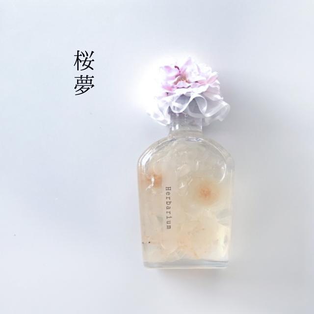 [お試し価格]完成品「桜夢」ハーバリウム&植物標本