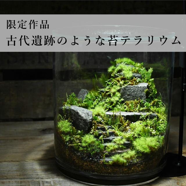 古代遺跡のような苔テラリウム 2021.2.7#4【苔テラリウム・現物限定販売】