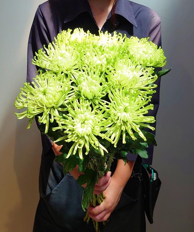 9月9日は『重陽の節句』長寿を願って 菊を飾ろう。 アナスタシアグリーン 送料無料