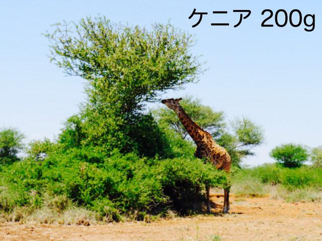 ケニア ギキリマ  中煎り 200g