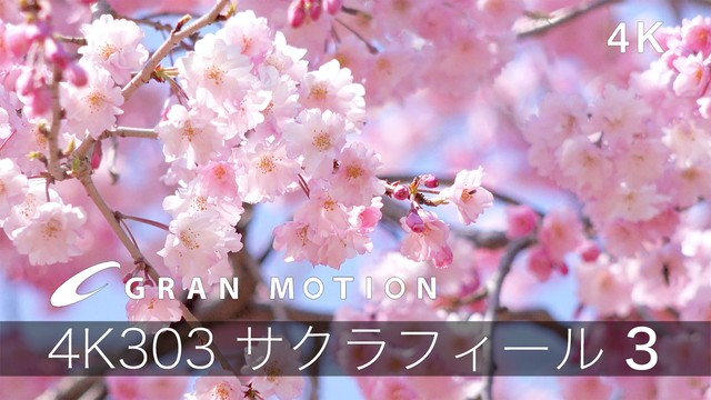 4K303サクラフィール3 グランモーション4K動画素材集(ダウンロード製品921MB)