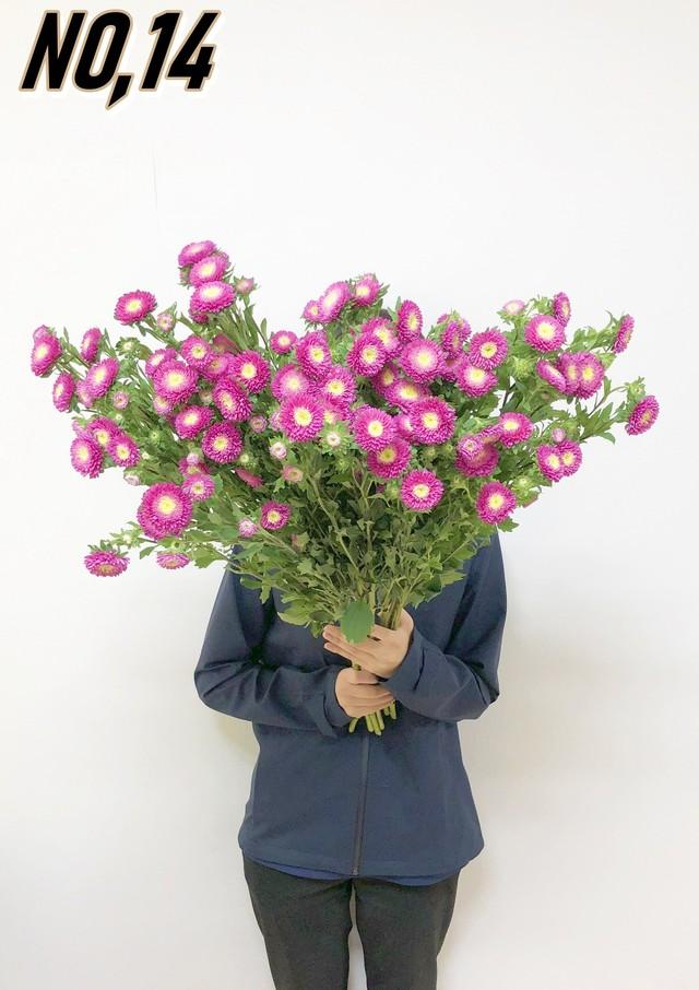 ★お墓参りへ行こう!国産お供え花シェアBOX50 №7【ロスフラワー救済!】