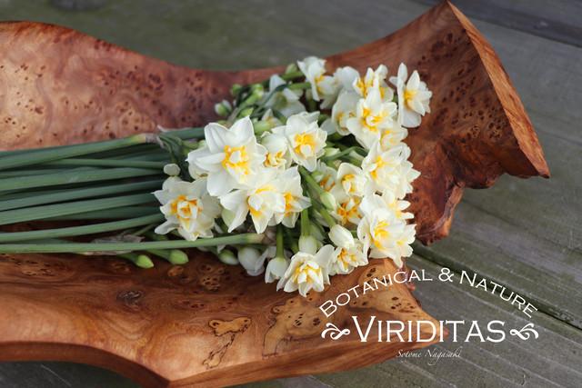 【お知らせ】Viriditasのブランドサイトを公開致しました。リンクはこちらから