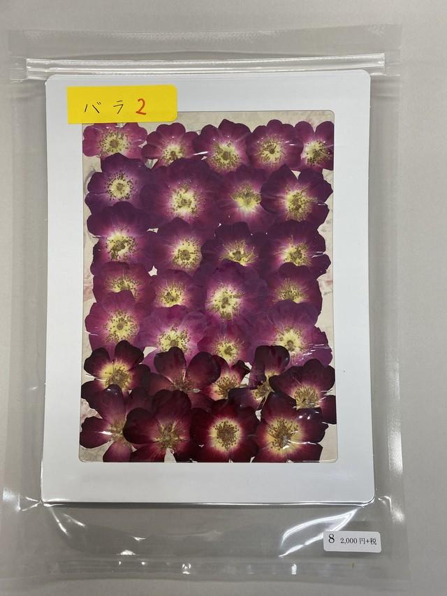 押し花パック バラ2