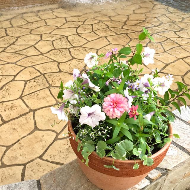 季節のおまかせ寄せ植え/コンパクトsize
