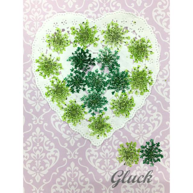コンパクト押し花 ハートフルレースフラワー(グリーン系) 少量をパックにしてお届け! 押し花素材