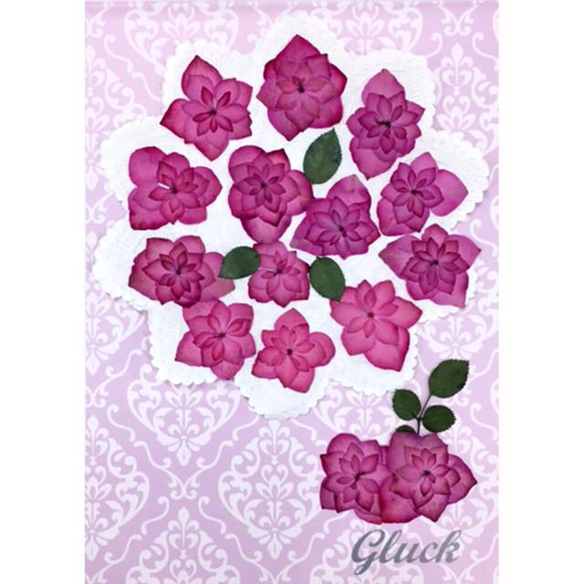 コンパクト押し花 八重あじさい(薔薇咲きピンク)少量をパックにしてお届け! 押し花素材