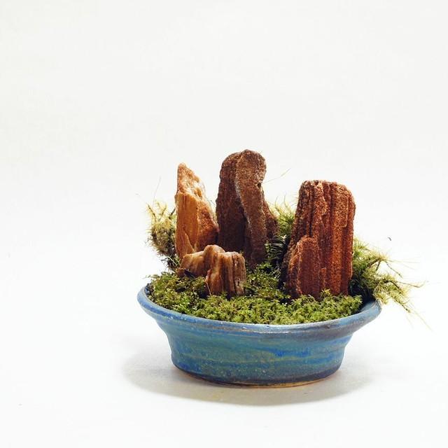 10cm 信楽焼 苔テラリウム 完成品 プレゼントにもおすすめ 現物 苔盆景 テラリウム 木紋石 開店祝い 新築祝い等に