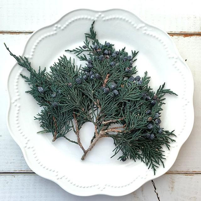 クリスマスには欠かせない マウンテンジュニパー [小枝・グリーン] プリザーブドフラワー