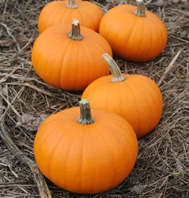 ハロウィンかぼちゃ(Sサイズ)