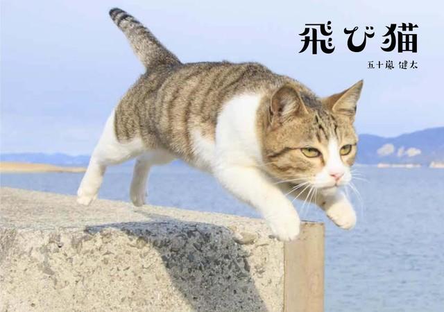 飛び猫 写真集