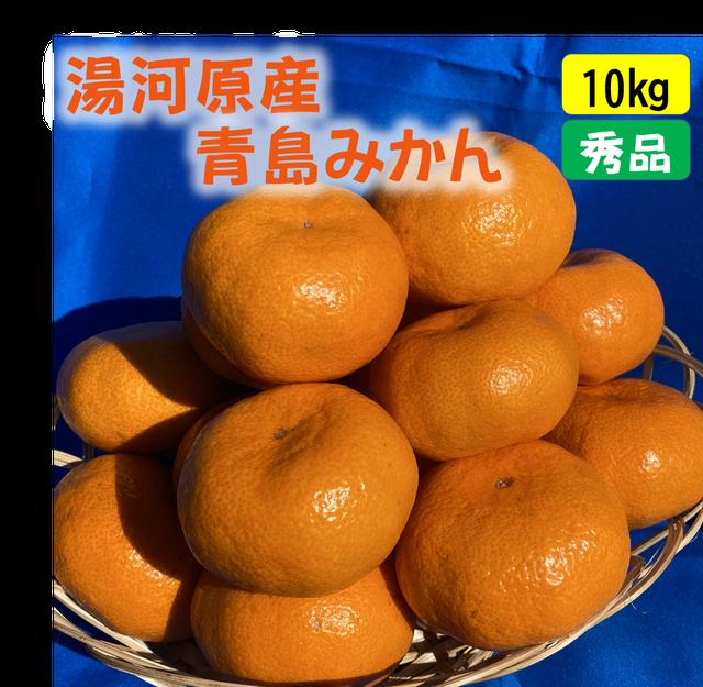送料無料 宮川早生みかん10kg(秀品)
