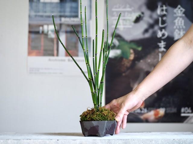 トクサ と スモーキーグレー 盆栽鉢 / XS