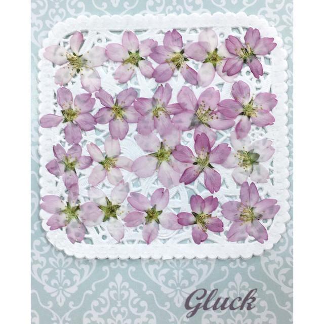 【春先どり◇】コンパクト押し花 ケイオウ桜 20枚 少量をパックにしてお届け! 押し花素材