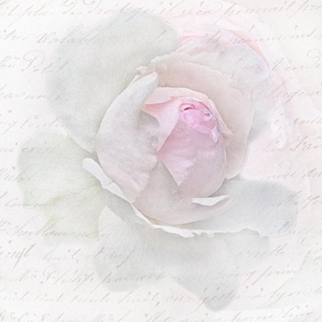 【Sagen Vintage Design】バラ売り2枚 ランチサイズ ペーパーナプキン PINK ROSE LETTER ピンク