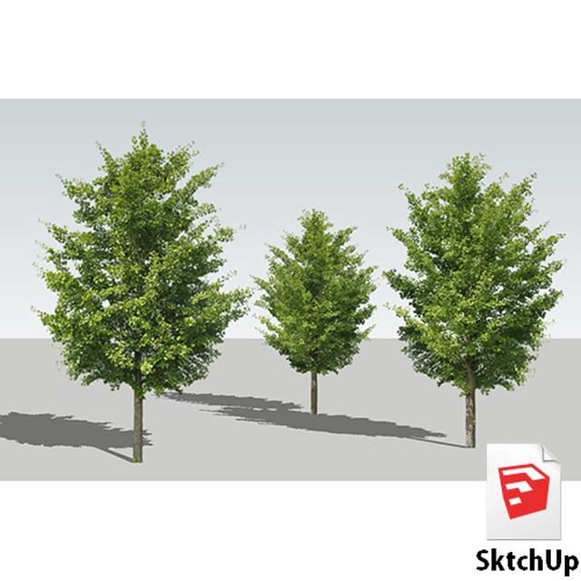 樹木SketchUp 4t_006 - メイン画像