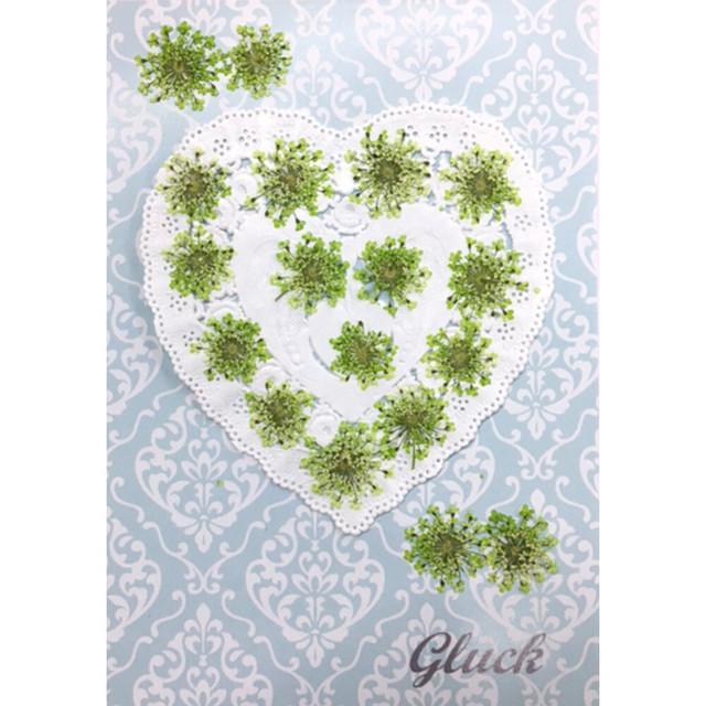 コンパクト押し花 ハートフルレースフラワー(着色ライムグリーン) 少量をパックにしてお届け! 押し花素材