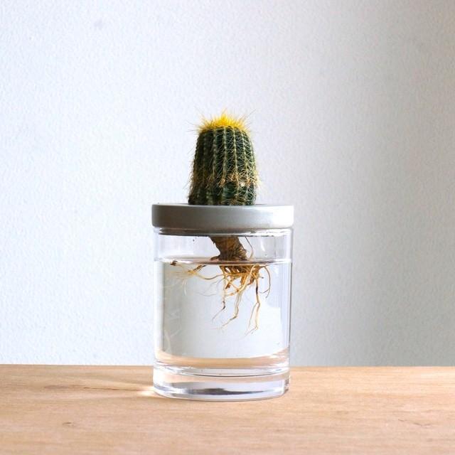 セメント水耕栽培容器 / 花瓶 -1-