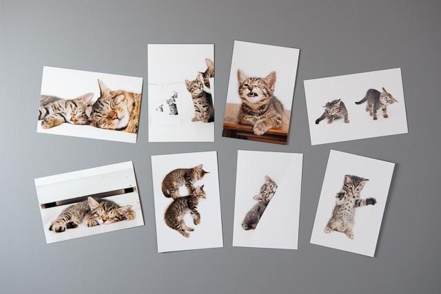 キジトラ猫 ポストカードセット【しろ】