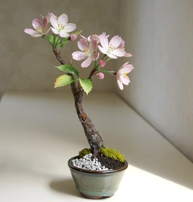 ブリリアントフラワー®(ロウの花)「桜盆栽」