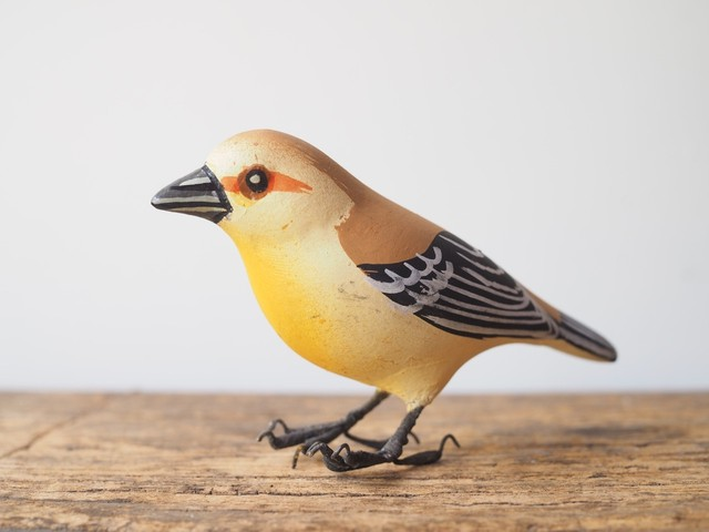 indian bird - Weaver bird(ハタオリドリ)