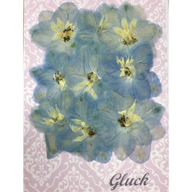 コンパクト押し花 デルフィニウム(大) 少量をパックにしてお届け! 押し花素材