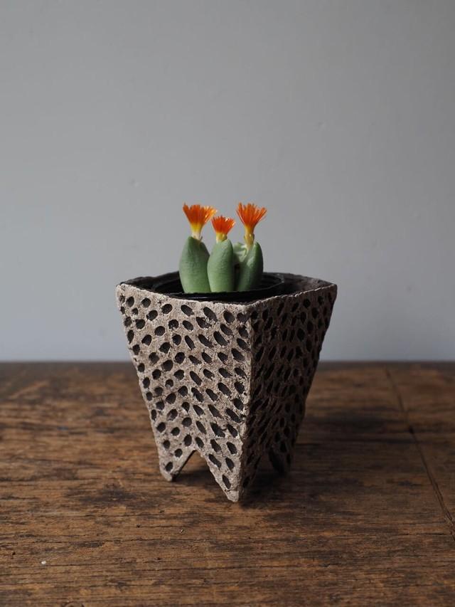 植木鉢 u21 かべ