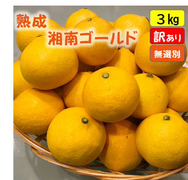 送料無料 超熟☆芳醇・湘南ゴールド(秀品)3kg
