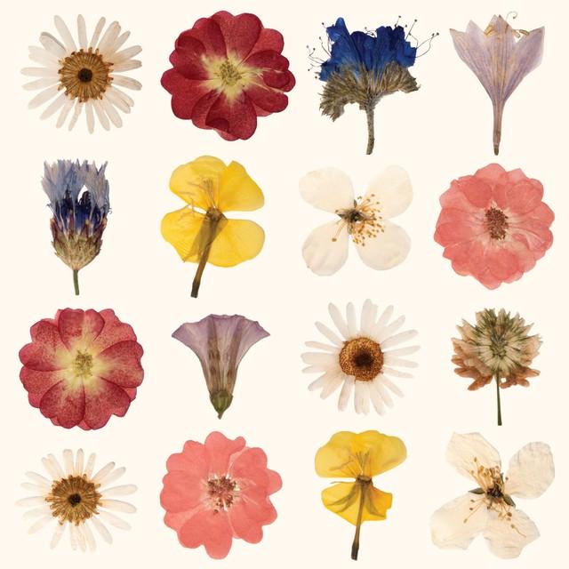 入荷しました|2020春夏【Paper+Design】バラ売り2枚 ランチサイズ ペーパーナプキン DRIED FLOWER クリーム