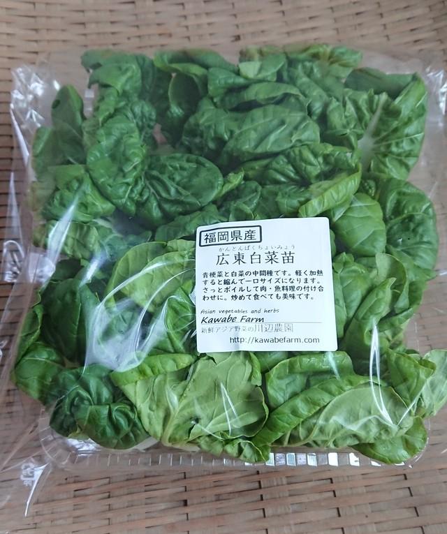 広東白菜苗 300g